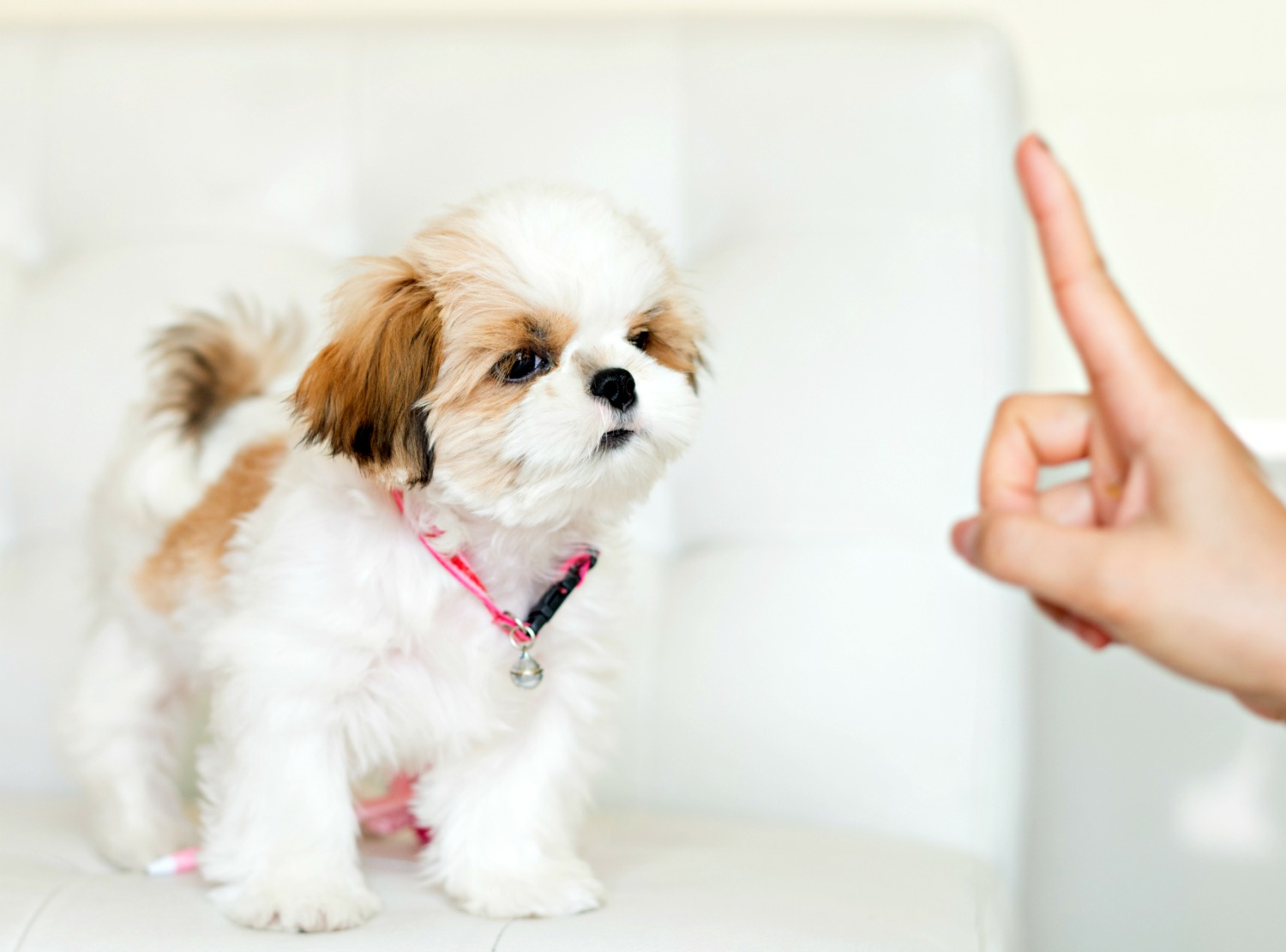 Puppy training tips for you