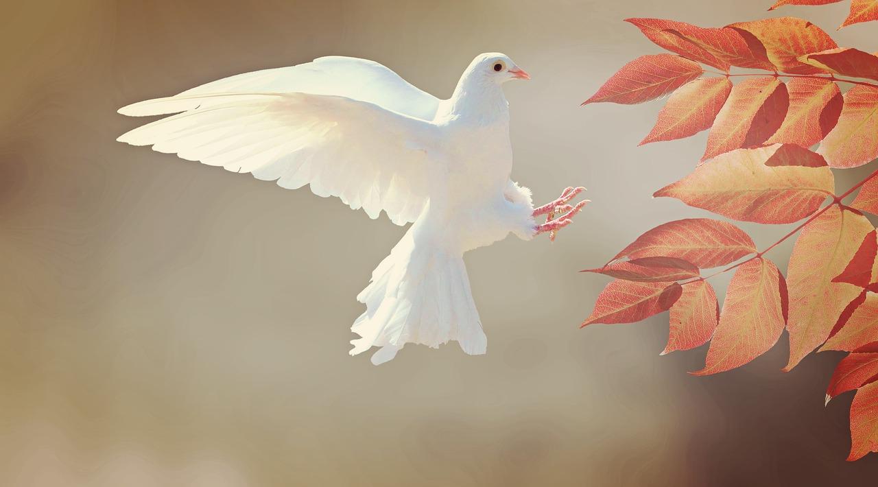 White pigeon making best scene for home