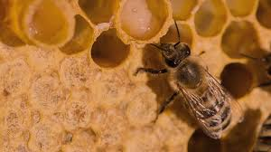 Cancer Treatment With Organic Royal Jelly