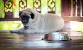 How To Choose Outdoor Dog Bowls?