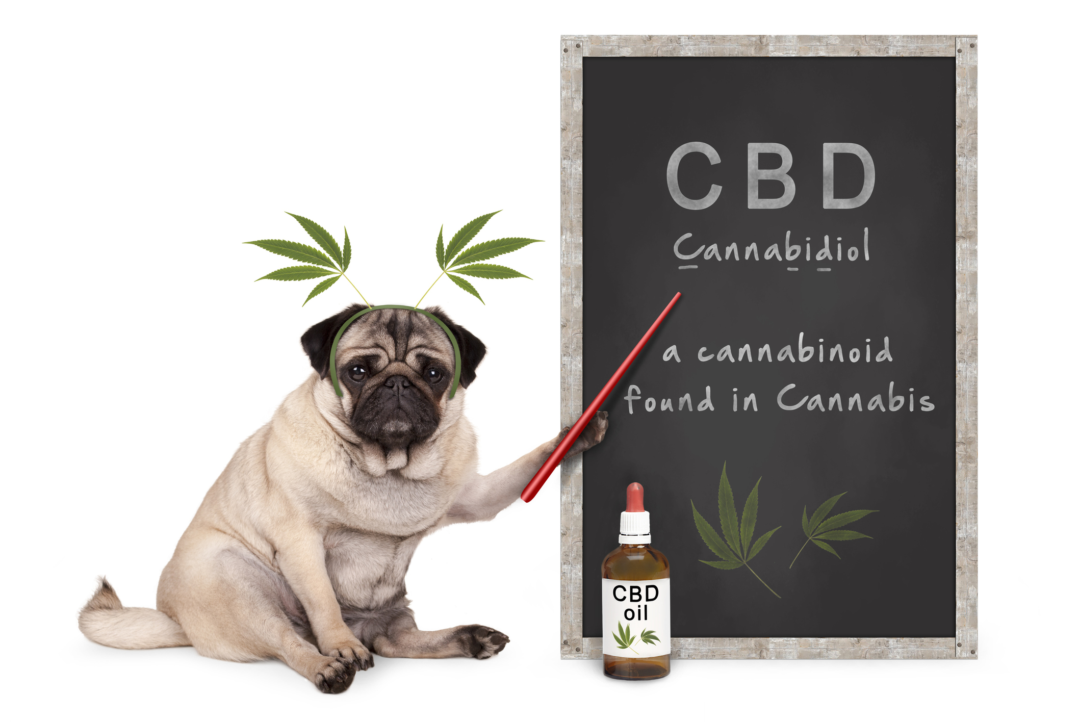 The Organic CBD that brings the most sophisticated medicine