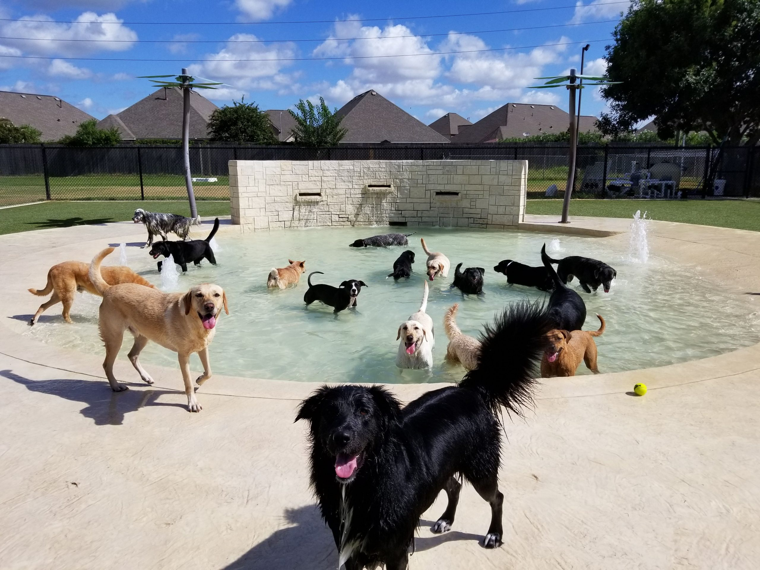 The Houston pet boarding with the best equipment